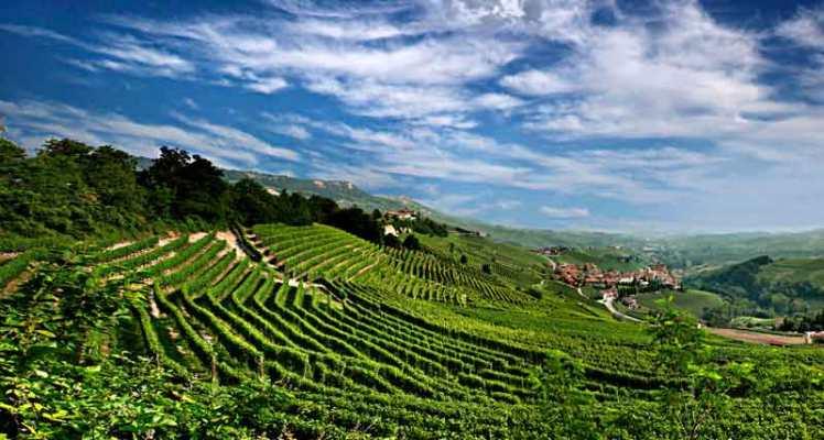 nuestros-vinos-tintos-pizzeria-rurale-tradicionales-italianos-puglia